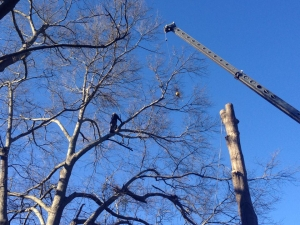 Tree Trimming in Ball Ground GA - Chipper Tree Service - 1044138_10203478366066650_78691981_n__1_