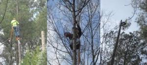 Professional Tree Removal Company Near Gainesville GA - Chipper LLC Tree Service - Collage2__1_