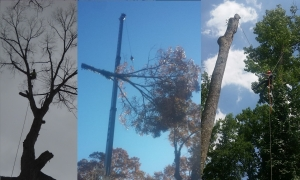 Tree Trimming in Dawsonville GA - Chipper Tree Service - Collage4__1_