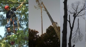 Professional Tree Trimming Company Near Ball Ground GA - Chipper LLC Tree Service - collage1__1_