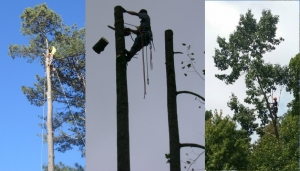 Professional Tree Removal Company Near Gainesville GA - Chipper LLC Tree Service - collage3__1_