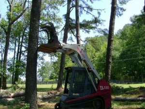 Tree Trimming in Ball Ground GA - Chipper Tree Service - download-11