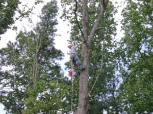 Quality Tree Pruning Company In Gainesville GA - Chipper LLC Tree Service - download-12