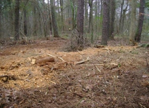 Expert Forestry Mowing Services In Woodstock GA - Chipper LLC Tree Service - download-18
