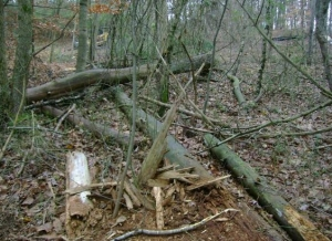 Stump Grinding in Duluth GA - Chipper Tree Service - download-19