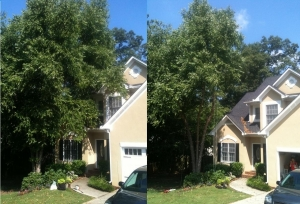 Quality Tree Pruning Company In Gainesville GA - Chipper LLC Tree Service - download-22
