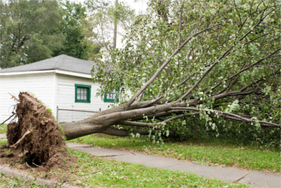 Decatur GA's Best Emergency Tree Service Company - Chipper LLC Tree Service - TreeRemoval2