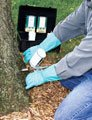 Tree Care & Fertilization Cumming GA - Mulch & Fertilizer - Chipper LLC Tree Service - ashborer_personinjecting
