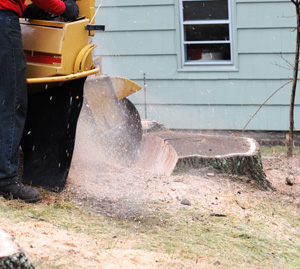 Lawrenceville GA's Top-Rated Concrete Demolition Company - Chipper LLC Tree Service - stump1