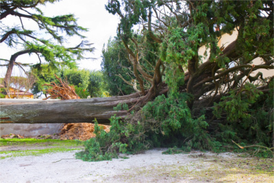 Emergency Tree Service in Suwanee GA - Chipper Tree Service - TreeRemoval1