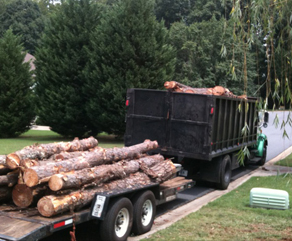 Tree Services Cumming GA: Tree Removal & Trimming | Chipper LLC - homepage